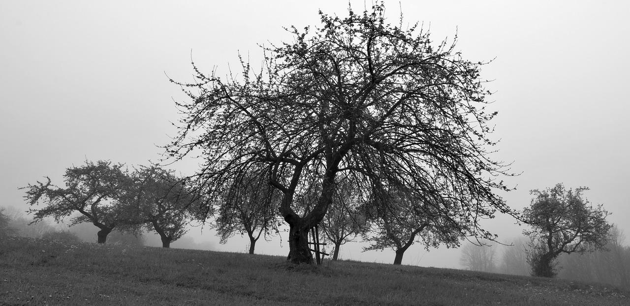 Primavera triste. VICENTE BLASCO IBÁÑEZ