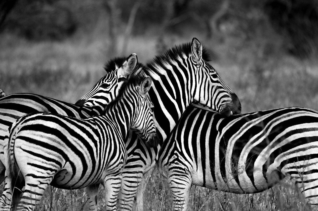 El mejor safari. NADINE GORDIMER