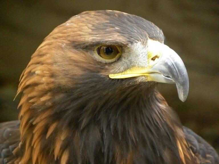 Águila irreal. JORGE SACHA